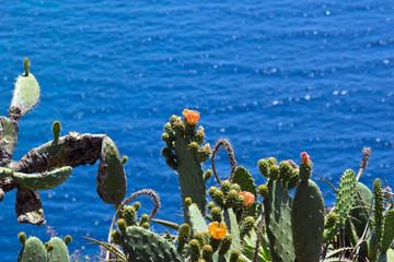 Kaktus vor dem Atlantik