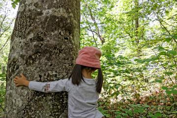大きなブナの木と子供