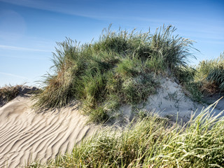 Dune on Rindby beach on the island Fanoe