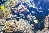 ecosystem, seabed with fish and coral reef poster