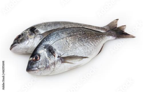 Papiers peints Poisson Dorado fish isolated on white background