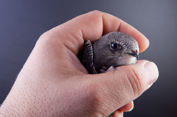 Baby bird in my hand