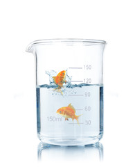 Goldfish swimming in a test tube