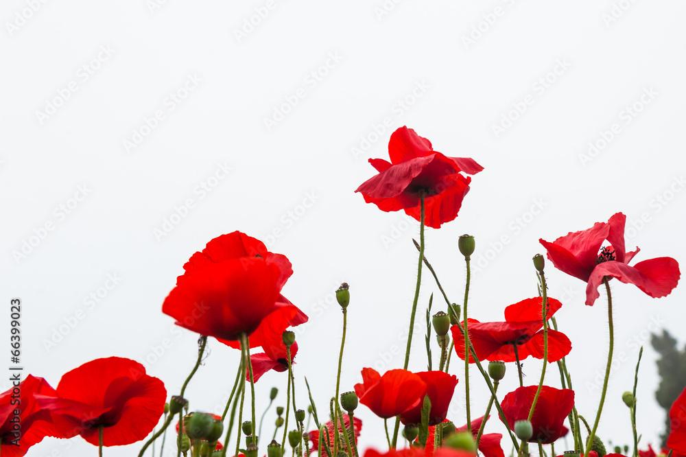 piękny świeży flora - powiększenie
