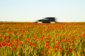 Car driving in a field with poppies