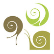 Snail - 66401255