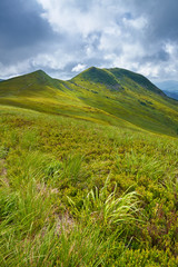 Bieszczady National Park. Carpathian Mountains grass landscape