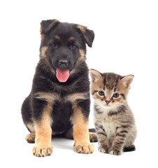 puppy and kitten looking