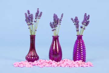 Vases lavender on blue background