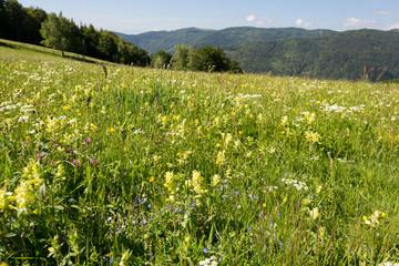 Pré fleuri en montagne