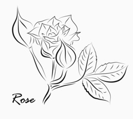 Rose motif,Flower design elements vector