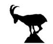 Capricorn silhouette - 66404498