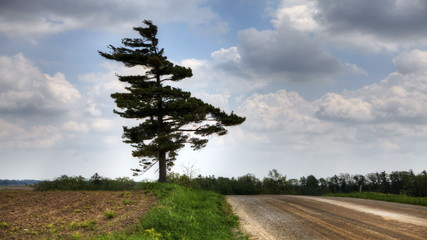 A lone tree stands by a country road, dramatic sky in this timel