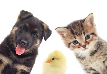 Puppy and kitten and bird