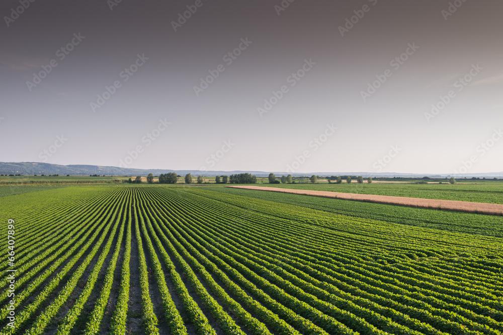 plon jedzenie zielony - powiększenie