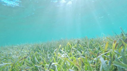 Tortoise grass reef