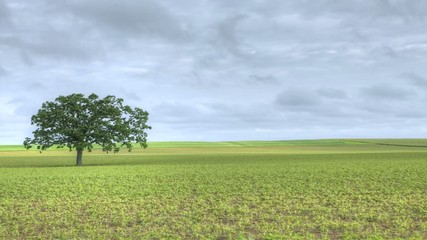 A timelapse of a solitary tree in a green field