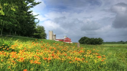 A timelapse of colorful orange flowers in a rural landscape