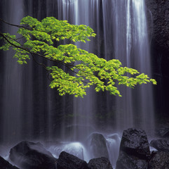 Waterfall and a leafy green branch, Inawashiro-machi, Fukushima Prefecture, Japan