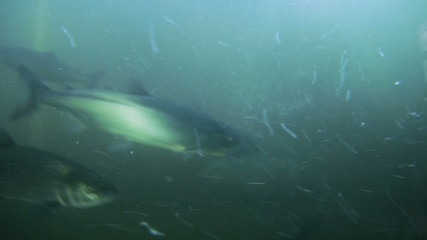 Fish Ladder Underwater Fisheye