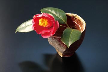 Camellia in a vase