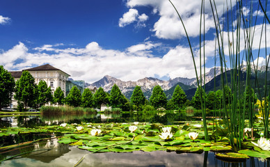 Water lily pond in Austria