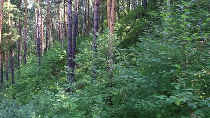 Beautiful vegetation on the hillside of Mount Tserkovka