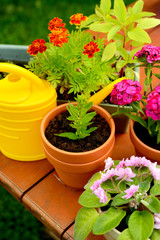 Flower pots and watering pot in green garden