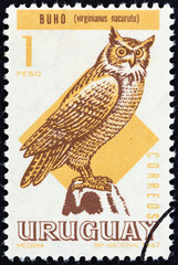 Great horned owl, Bubo virginianus nacurutu (Uruguay 1968)