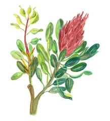 Protea Sugarbush