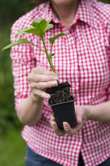 Closeup of senior woman holding a plant in pot
