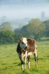 Animal ferme 118