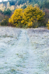 frosted autumnal meadow