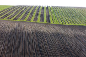 vineyards with field, Southern Moravia, Czech Republic