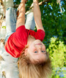 canvas print picture - Child hanging from a tree branch