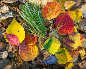 Autumn, colored leaves, autumnal foliage