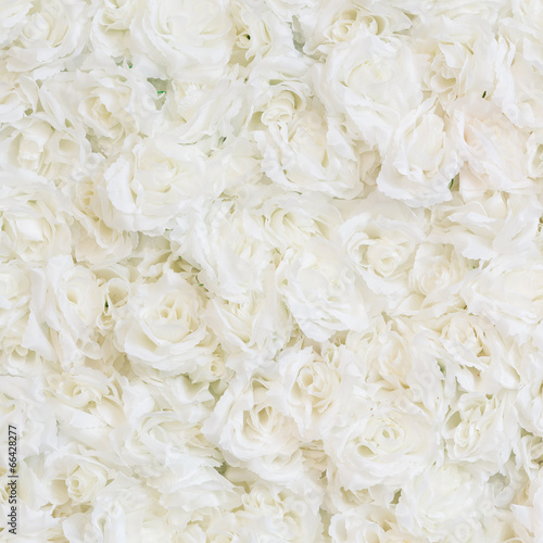 Aluminium Rozen White rose background