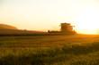 canvas print picture - Ernte im Sonnenuntergang