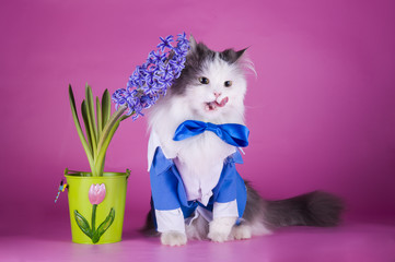 cat in a blue suit on a pink background