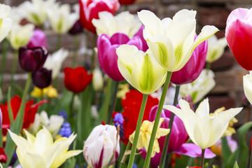 Vivid garden flowers