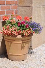 Flowers in the pot on brick wall background
