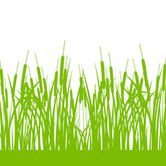 Grass, wild plants detailed silhouettes illustration background