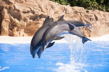 Dolphins jump