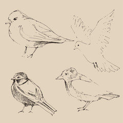 Bird set  vintage illustration, engraved retro style