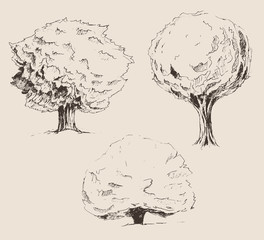 trees sketch set, vintage illustration, engraved retro style