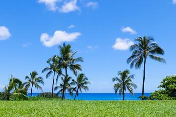 常夏の景色 ヤシの木と青空
