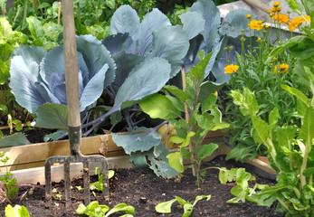 légumes dans potager
