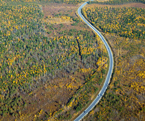 highway which go through autumn forest