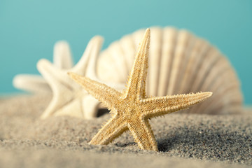 Starfish and seashell on beach