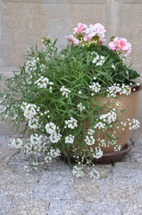 Flowers in the pot outside under the stone wall